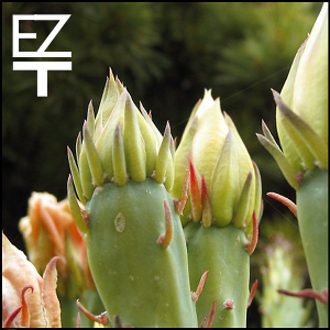 EazyTom – Dub Noctem